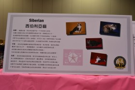 The Introduction of Siberian Cats by the Organization